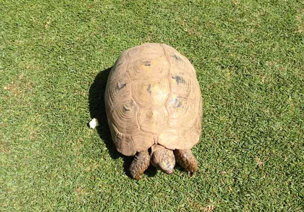 turtle-golf-course